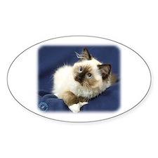 Ragdoll Cat 9W082D-011 Decal