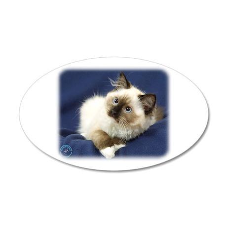 Ragdoll Cat 9W082D-011 22x14 Oval Wall Peel