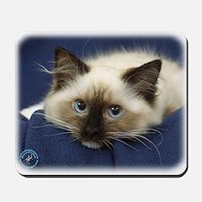 Ragdoll Cat 9W082D-020 Mousepad