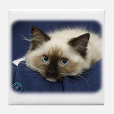 Ragdoll Cat 9W082D-020 Tile Coaster