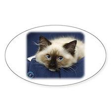 Ragdoll Cat 9W082D-020 Decal