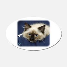 Ragdoll Cat 9W082D-020 22x14 Oval Wall Peel