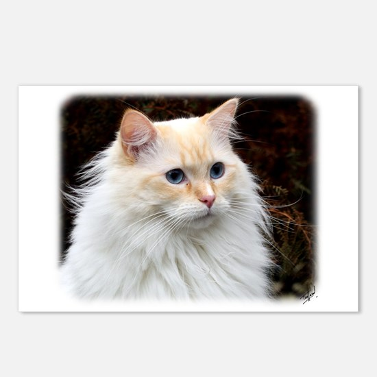 Ragdoll Cat 9W082D-020 Postcards (Package of 8)