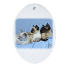 Siamese Cat 9W055D-074 Ornament (Oval)