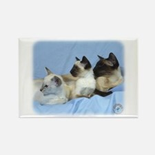 Siamese Cat 9W055D-074 Rectangle Magnet