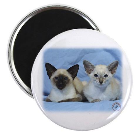 Siamese Cat 9W055D-100 Magnet