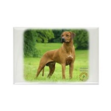 Rhodesian Ridgeback 9M046D-19 Rectangle Magnet