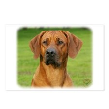 Rhodesian Ridgeback 9Y086D-111 Postcards (Package