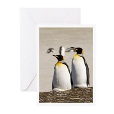 Funny Falklands penguin Greeting Cards (Pk of 10)