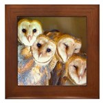 Third Clutch Owlets Framed Tile