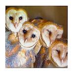 Third Clutch Owlets Tile Coaster