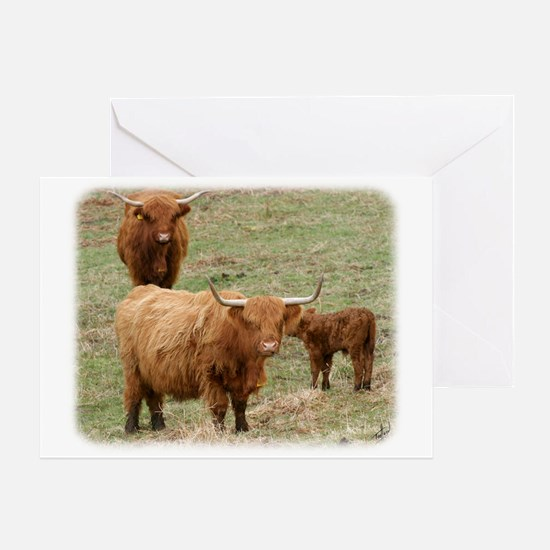 Highland Cattle 9Y316D-017 Greeting Card