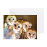 Third Clutch Owlets Greeting Cards (Pk of 20)