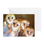 Third Clutch Owlets Greeting Card