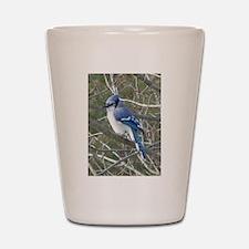 Blue Jay Shot Glass