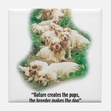 Cute Clumber spaniel Tile Coaster