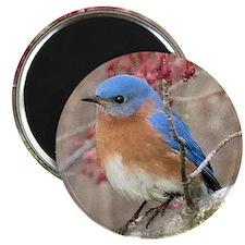 Bluebird Eastern Magnet