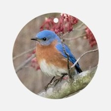 Eastern Bluebird Ornament (Round)