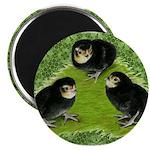 Baby Chicks in the Garden Magnet