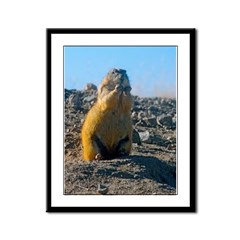 Cute Prarie Dog Picture Framed Panel Print