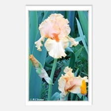Iris, colorful, Postcards (Package of 8)