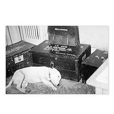 General Patton's Dog Willie