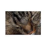 Sleeping fluff Rectangle Magnet (10 pack)