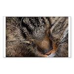 Sleeping fluff Rectangle Sticker