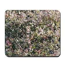 Princess Blossom Mousepad