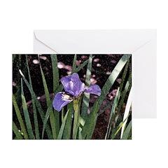 Siberian Iris Greeting Cards (Pk of 10)