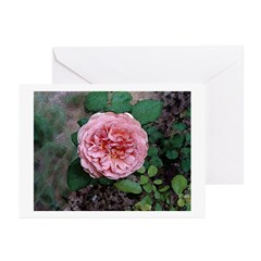 Old Fashioned Rose Greeting Cards (Pk of 10)