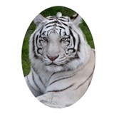 White tigers Oval Ornaments