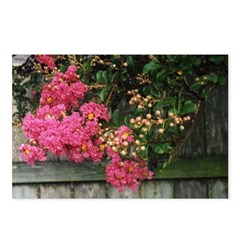 Flowering Trees Postcards (Package of 8)