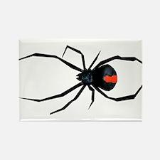 Redback Spider Rectangle Magnet