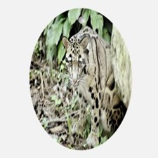 Clouded Leopard series 1 Oval Ornament