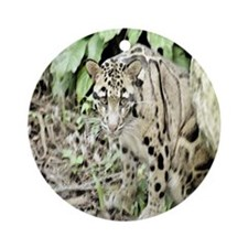 Clouded Leopard series 1 Ornament (Round)