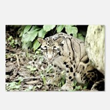 Clouded Leopard series 1 Postcards (Package of 8)