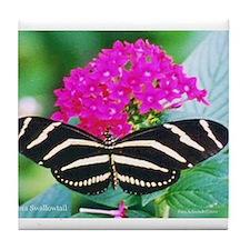 Zebra Swallowtail Tile Coaster
