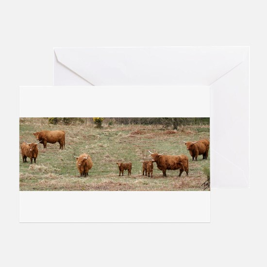 Highland Cattle 9Y316D-007 Greeting Card