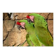 Military Macaw series 3 Postcards (Package of 8)