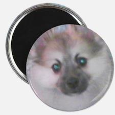 Unique Pomeranians Magnet