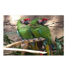 Military Macaw series 4 Postcards (Package of 8)