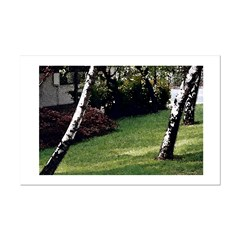 Leaning Trees Posters