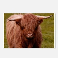 Scottish Highland Cow Postcards (Package of 8)