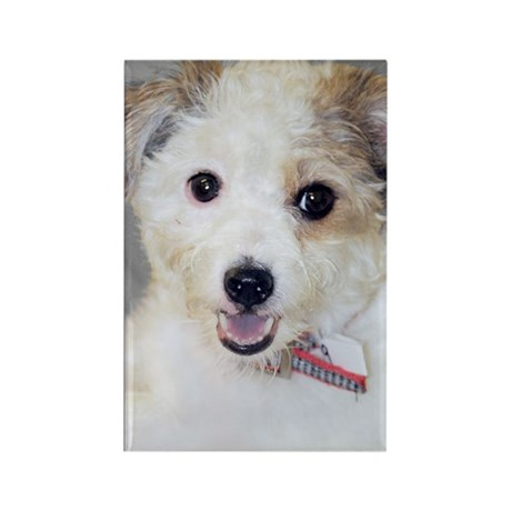 Jack Russell Mix Photo Rectangle Magnet
