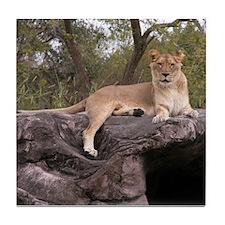 Lioness Tile Coaster