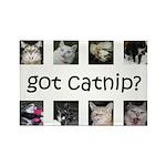 Got catnip Rectangle Magnet (100 pack)