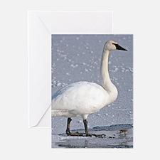 Swan Greeting Cards