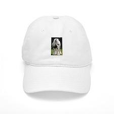 Gypsy Horse Stallion Baseball Cap