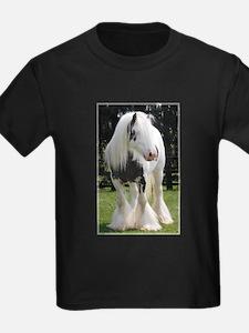 Gypsy Horse Stallion T